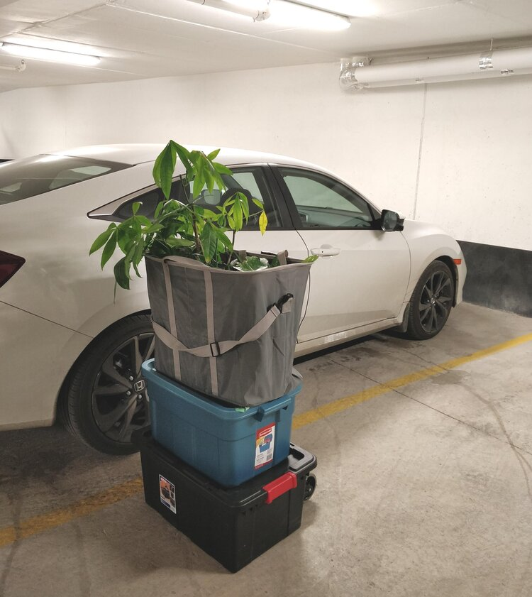 I had the good fortune of moving my plants from one parking garage to another - no winter exposure for these plants!  Product Links:  Sturdy black moving boxes with latches:  https://amzn.to/2MGaG5U   Folding hand truck:  https://amzn.to/2tizc6E